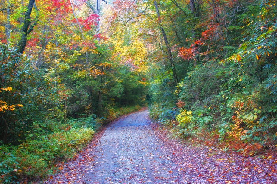 A path in North Carolina leading to Autumn.