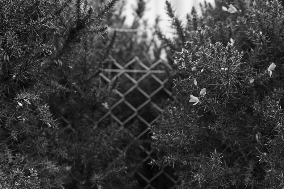 Fenced plants