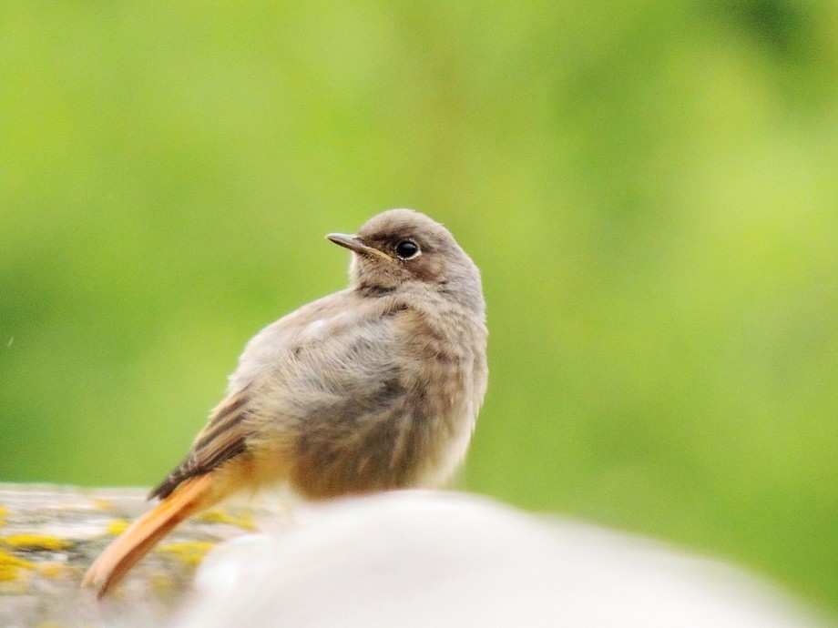 As I was walking around a little French Alp town, this little bird grabbed my attention and I had...
