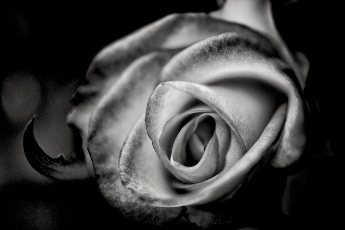Fleur Ouverte by slydeshaies