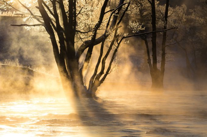 Magic light by varemo - Silhouettes Of Trees Photo Contest
