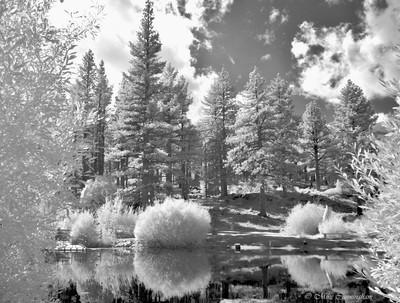 Marylin Pond Reno Nevada In Black & White Infrared