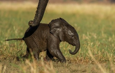 Guided by the trunk