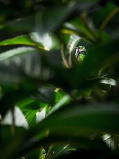 hummingbird through the bush
