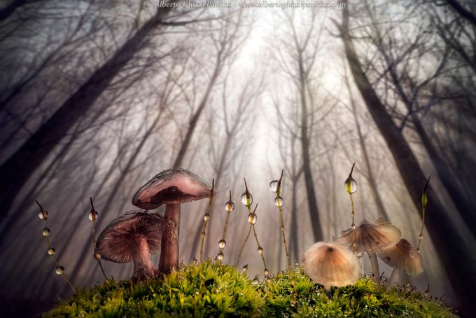 Small and giant creatures of the forest by albertoghizzipanizza - Disrupting Depth Photo Contest