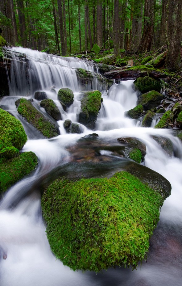 121128 Sol Duc Oly Rain Forest by DustinPenman - Streams In Nature Photo Contest