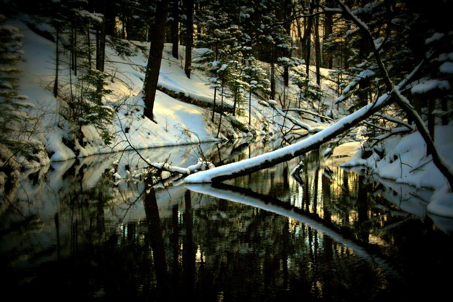 Fallen trees in Harlow Creek can see their reflections in the stillness of the water. Michigan wi...
