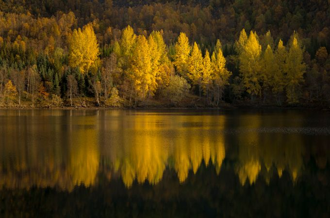 Autumn gold by Malonna - Lakes And Reflections Photo Contest