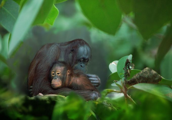 Safe by joecas - Monkeys And Apes Photo Contest