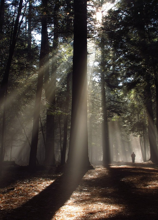 Walking Through the Ancient Forest  by jeffpudlinski - Tall Trees Photo Contest