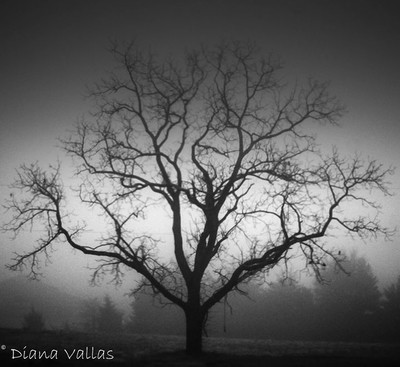 You Decide- Tree of Good or Tree of Evil