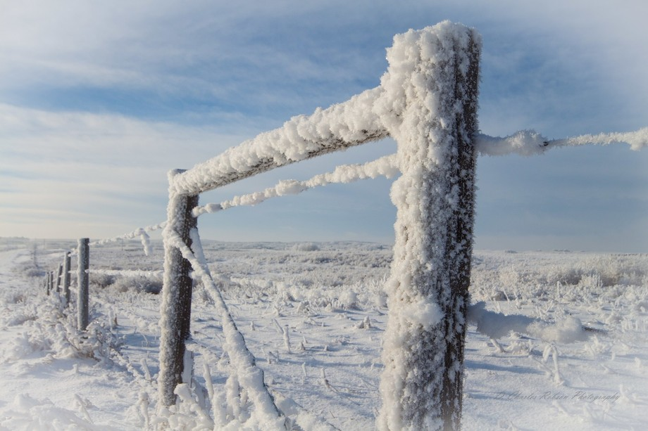 A cold and humid prairie morning results in thick hoare frost