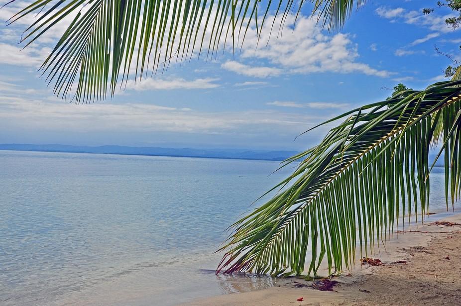 Starfish Beach near Boca Del Toro Panama