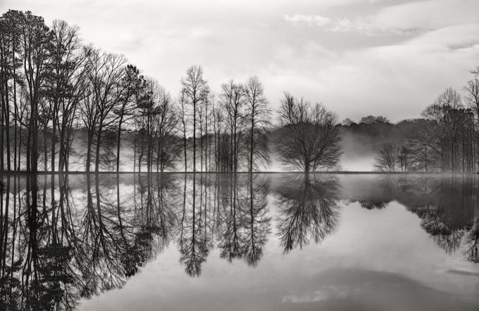 Reflected trees by GloriaMatyszyk - Silhouettes Of Trees Photo Contest
