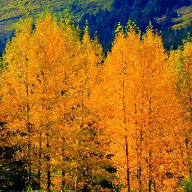 Autumn in Alaska near the Portage Glacier