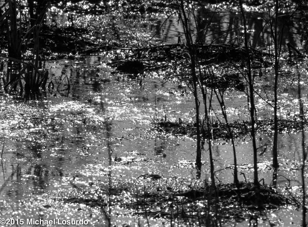 I just like water reflections