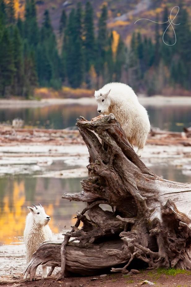 Kids Play by julielubick - Wildlife Photo Contest 2017