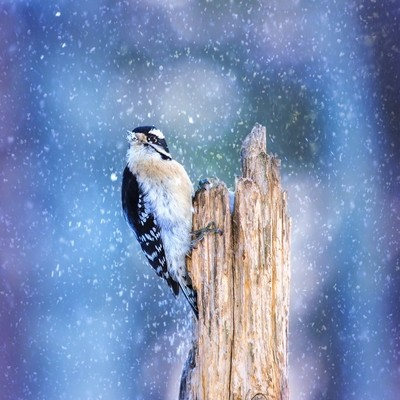 Snowy Winter Downy