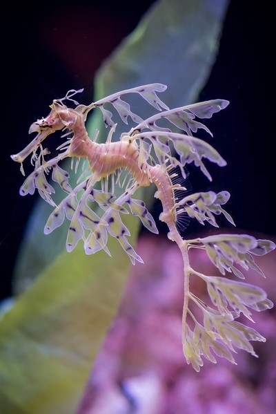 Florida Aquarium Shots