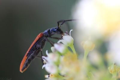Pollen Eating