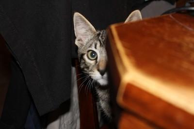Cat Spying