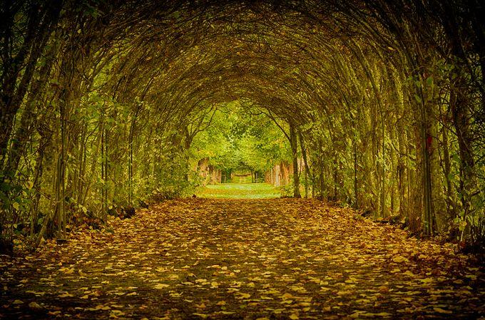 Ängsö love tunnel by Gazzmo - Fall 2016 Photo Contest