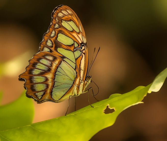 Butterfly by David-B - Beautiful Butterflies Photo Contest