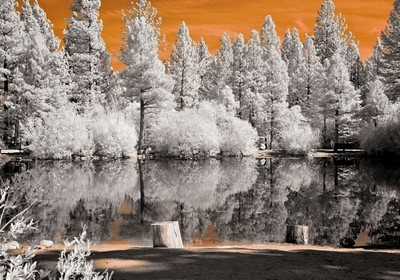 A Day At The Pond In Infrared.
