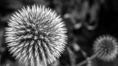 English Bay Flower