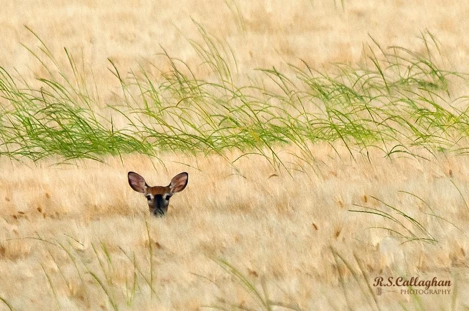 Peering Through the Wheat