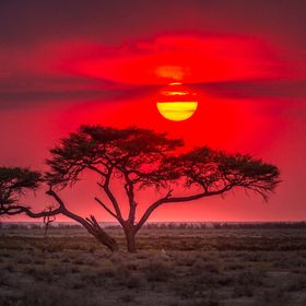 sky was turning bloody red short after sunrise in Etosha National Park in Namibia