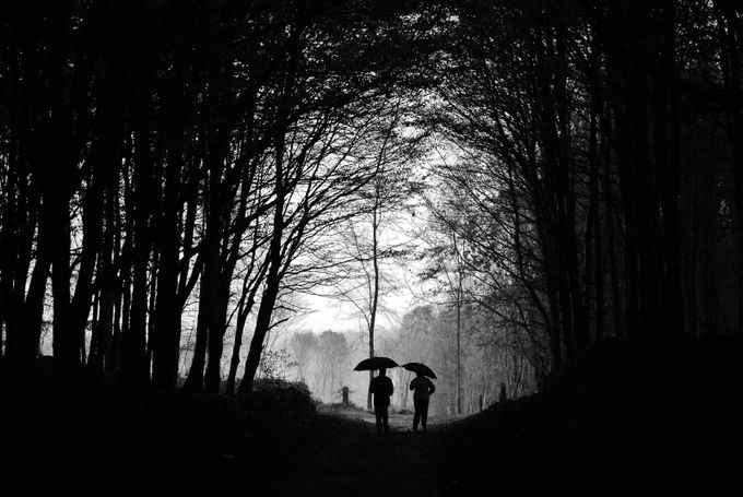 The Woods by Hedde - Take A Stroll Photo Contest