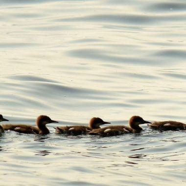 Keeping Ducks in a Row