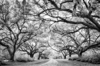 Oak Covered Drive