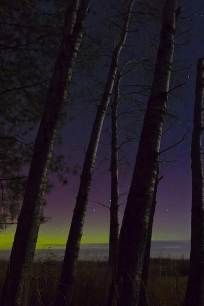 Trees in Moonlight
