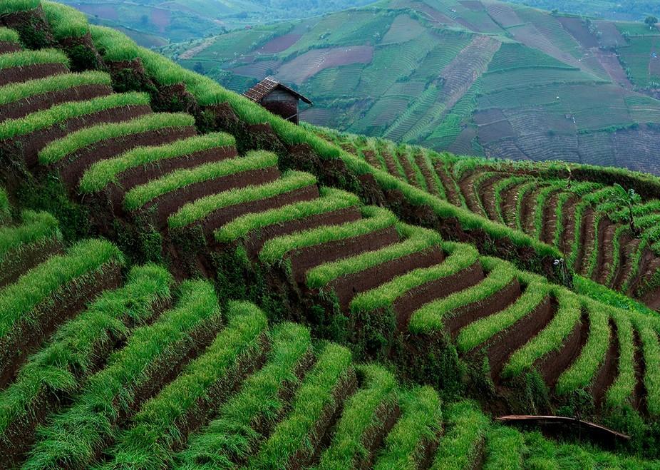 Ladang Bawang Argapura