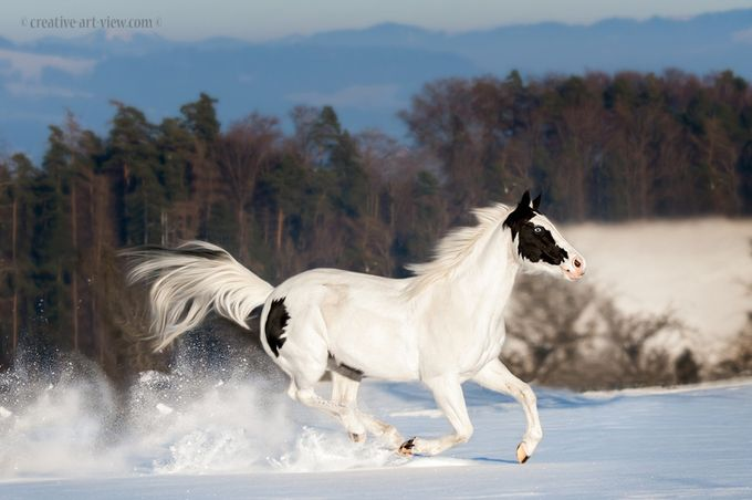 fun in the snow by CreativeArtView - Show Movement Photo Contest