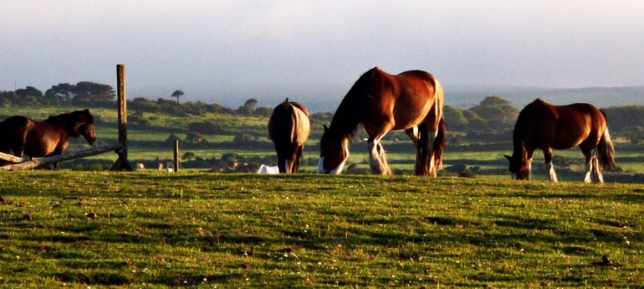 British countryside and horses at sunset  copy