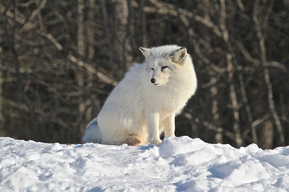 Can be found at Parc Omega Quebec