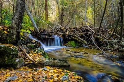 Autumn River Run