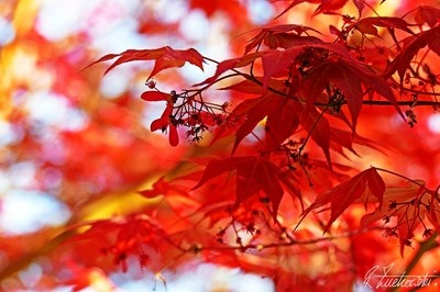 glowing reds
