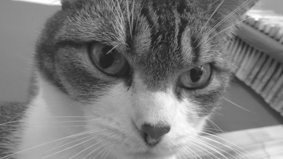 Cat (Tsunami)