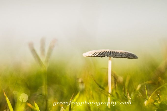 standing tall by girlsfromaus - Mushrooms Photo Contest