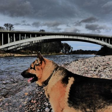 Tyson watching for Spring Salmon on the Findhorn 24/01/16