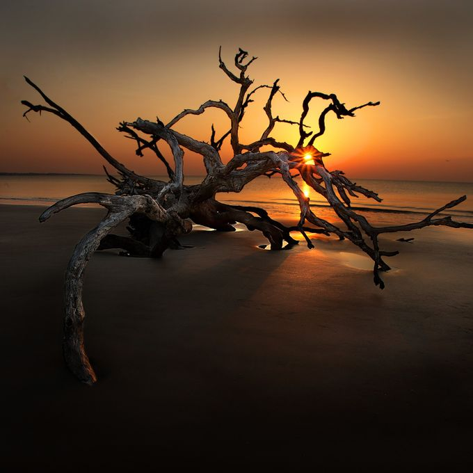 Jekyll Island 2014 Dritwood sunstar NO WMRK by rivarologallery