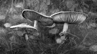 Bokeh affect adds magic to this detailed image of three mushrooms nestled in grass. by Theo-Herbots-Fotograaf