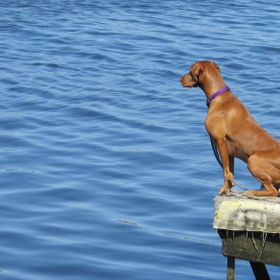This is a beautiful shot of a dog on the edge of the pier. It seemed as if he was ready to jump in the water.