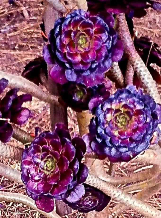 The Strangest Plant!