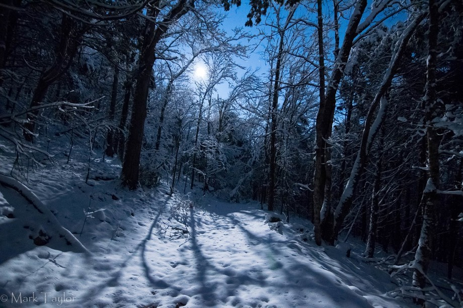 Night hike on a trail at Edgar Evins State Park by the light of the first full moon of the year(W...