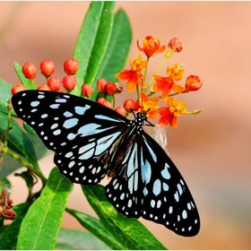 Beautiful butterfly & flowers